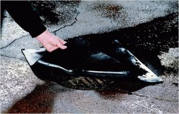 Zammie® Sewer Stopper
